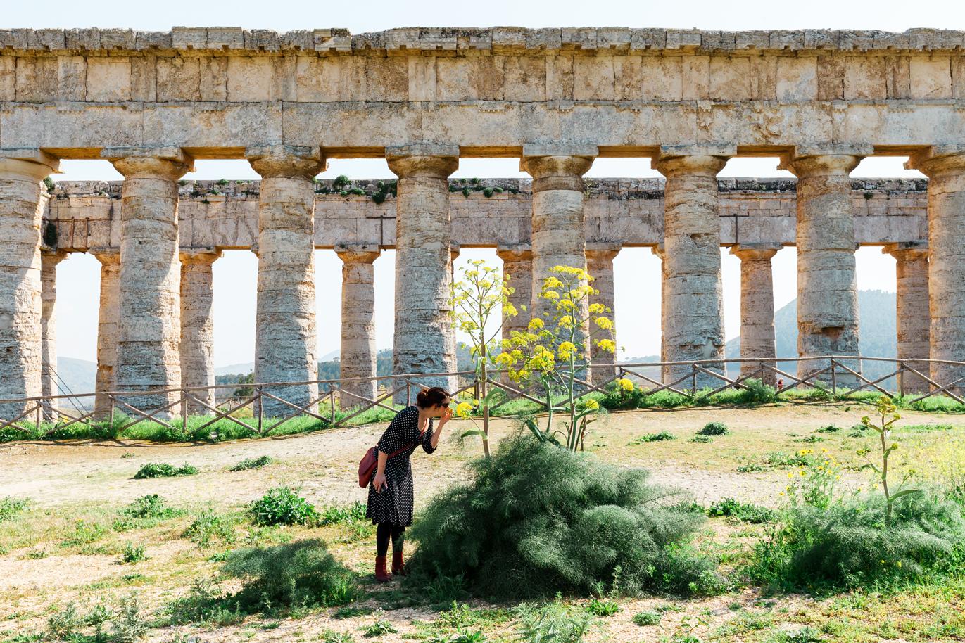 Wilde kruiden bij de Griekse tempel in Segesta