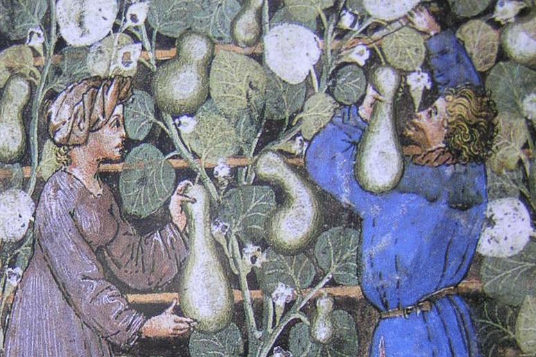 Pompoen in de Tacuinum Sanitatis