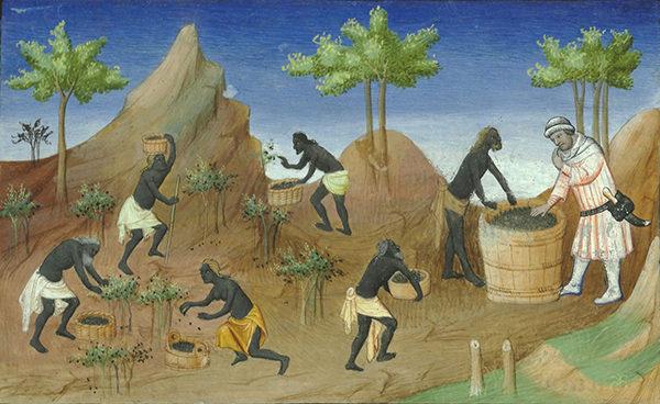 Peperoogst. Uit: Le livre des merveilles de Marco Polo, vijftiende eeuw