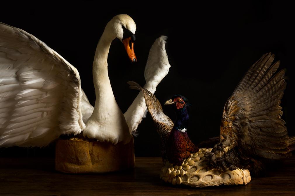 Pronkpastei-zwaan-en-fazant eet!verleden