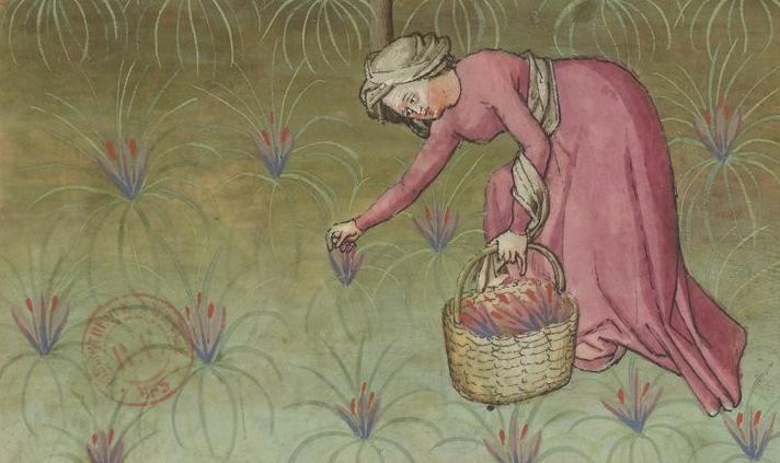 Dame plukt saffraan uit Tacuinum sanitatis (14e eeuw)