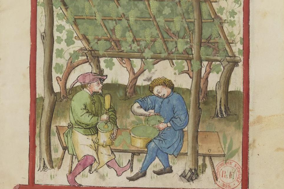Productie van verjus in Tacuinum sanitatis (14e eeuw)