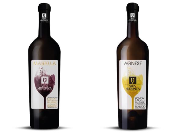 Falernum wijnen Vitis Aurunca