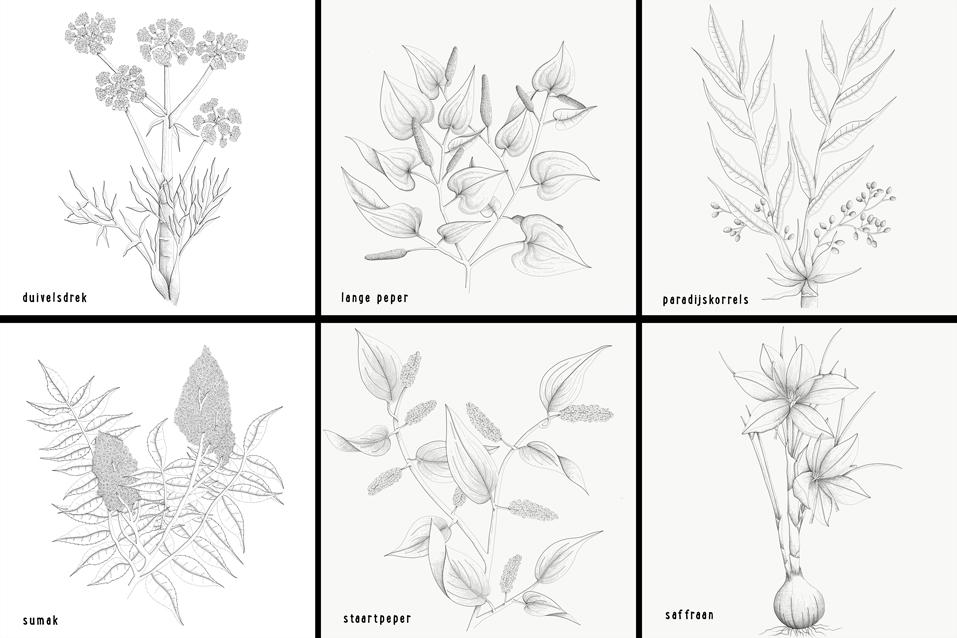 Botanische tekeningen eet!verleden