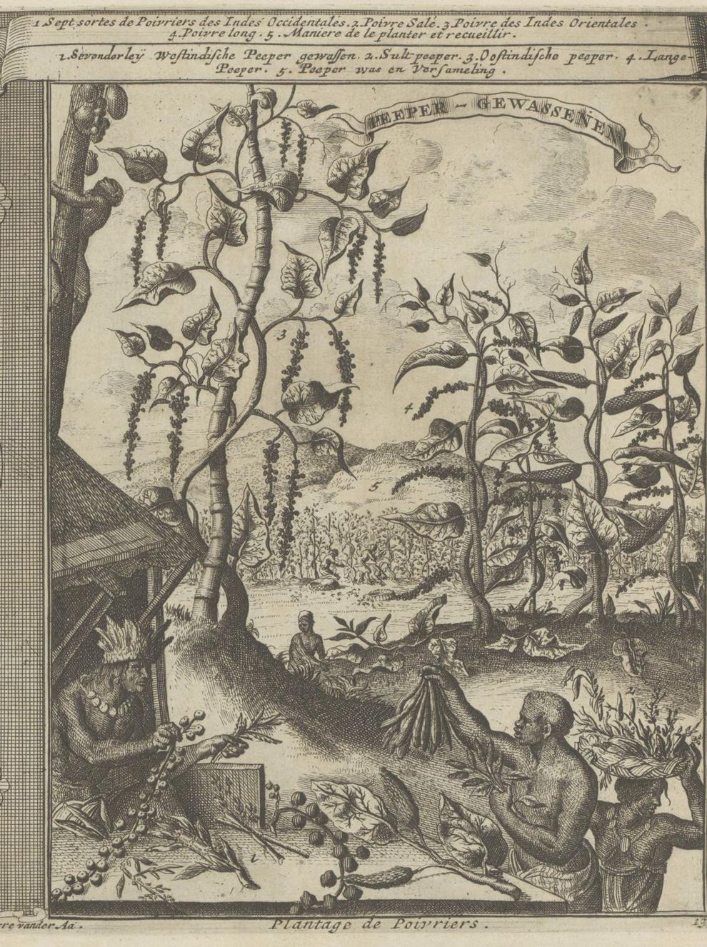 Pepervelden, Romeyn de Hooghe, 1682-1733, Rijksmuseum